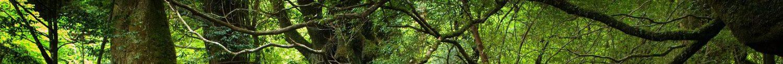 cropped-xtra-kinoshima-forest1.jpg